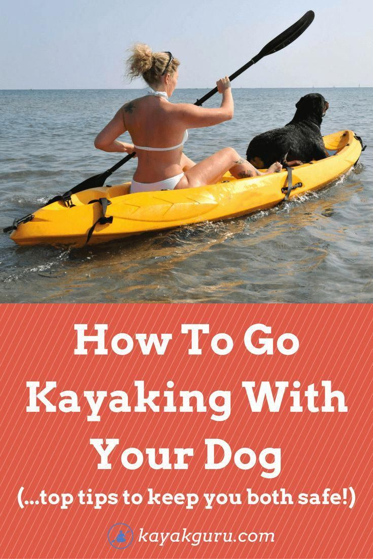 Photo of How To Go Kayaking With Your Dog – Dog Accessories, Tips & Advice