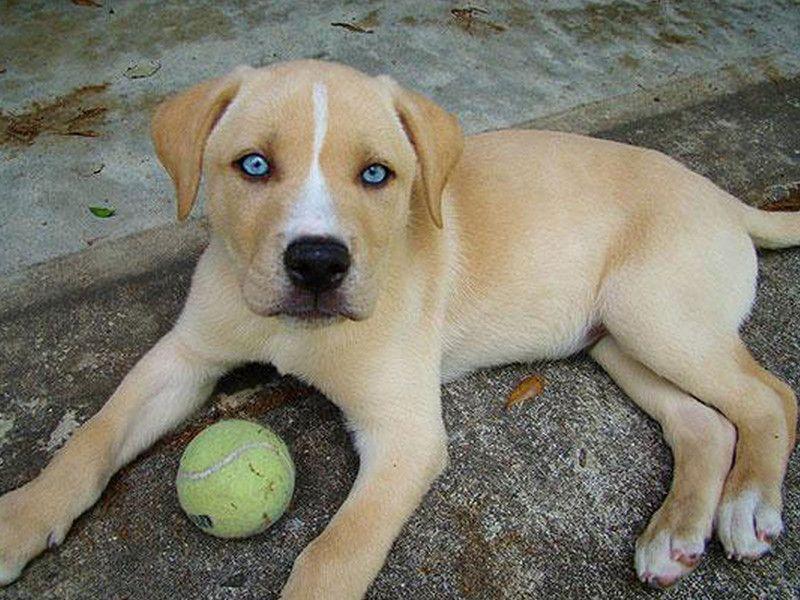 On peux trouver des centaines de races de chien differentes dans le monde toutes avec des caracteristiques propres. Quand des croisements sont realises entre toute ces races de toutou, les specimens de chiens obtenus sont tous plus originau