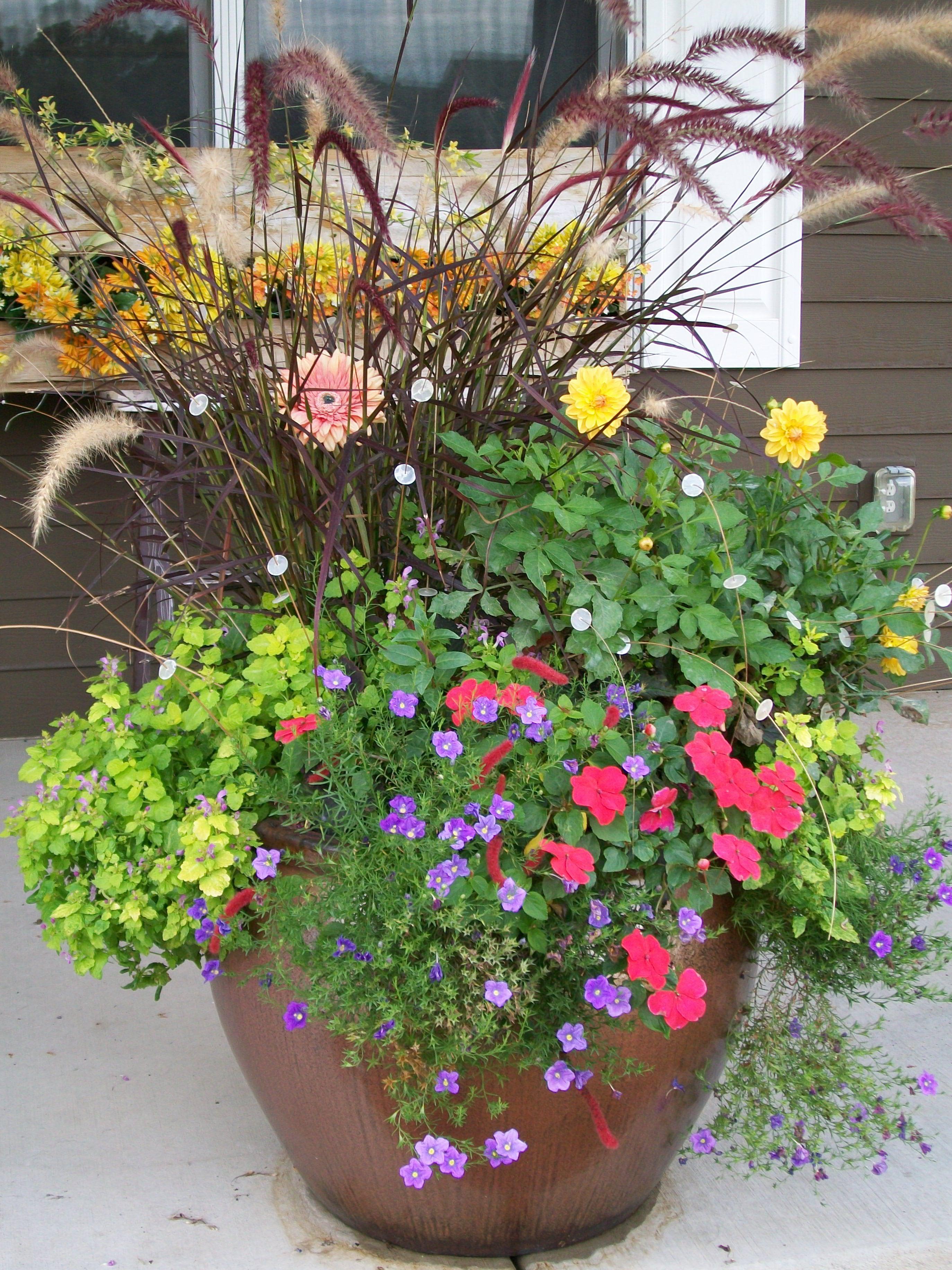 Summer annual container for part sun garden ideas pinterest - Container gardens for sun ...
