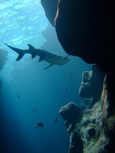 Hawaii Pacific University Marine Biology program Marine Biology - marine biologist job description
