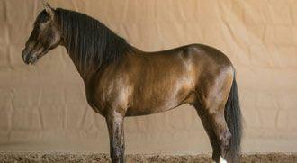 FOTOS Cinco nuevos caballos para 2013  Bautiza a las nuevas estrellas de Ventura - Mundotoro.com