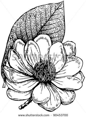 magnolia flower drawing - Google Search