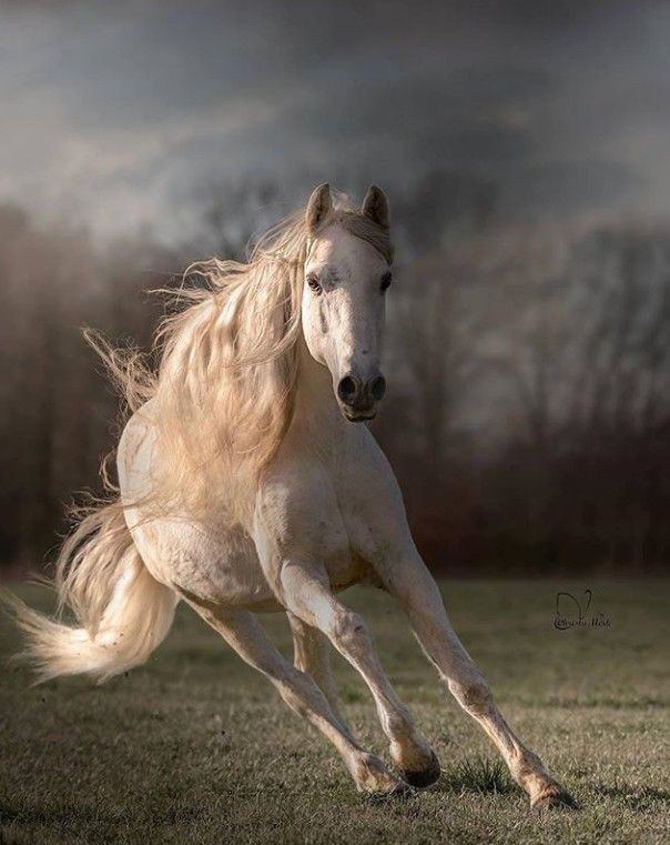 Baron fan Odingastate | 美しい馬, かっこいい動物, 可愛い 動物