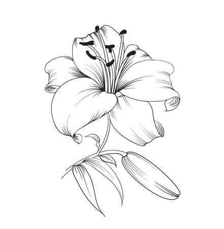 Lys blanc isolé sur un fond blanc. Carte avec fleurs de lys. Vector illustration