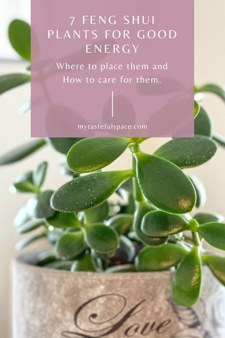 7 Feng Shui Plants That Are Easy to Keep Alive - My Tasteful Space -   16 plants Office feng shui ideas
