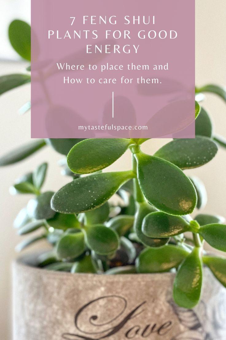 16 plants Office feng shui ideas
