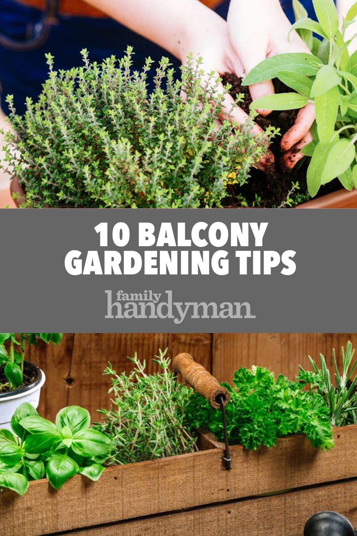 10 Balcony Gardening Tips #balconygarden