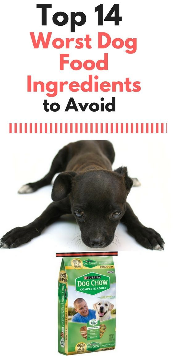 Worst Dog Food 14 Signs Your Dog Food Might Be Junk Dog Food