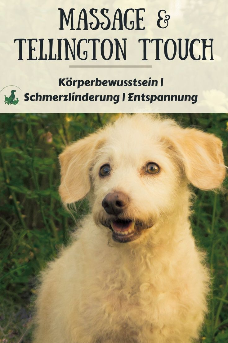 Workshop Massage Und Ttouch Alter Hund Gesunde Hunde Hunde