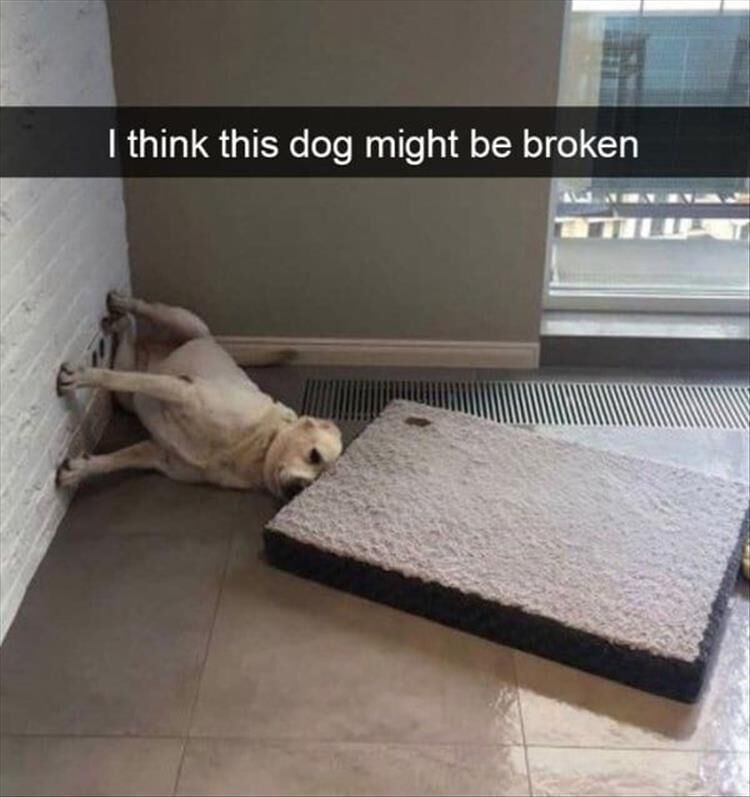 26 Funny Animal Pictures