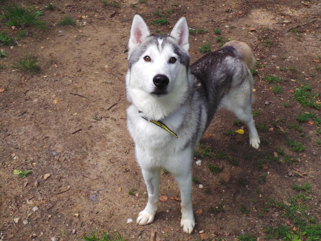 Ramsez Dogs Trust Dogs Dogs Trust Dog Adoption