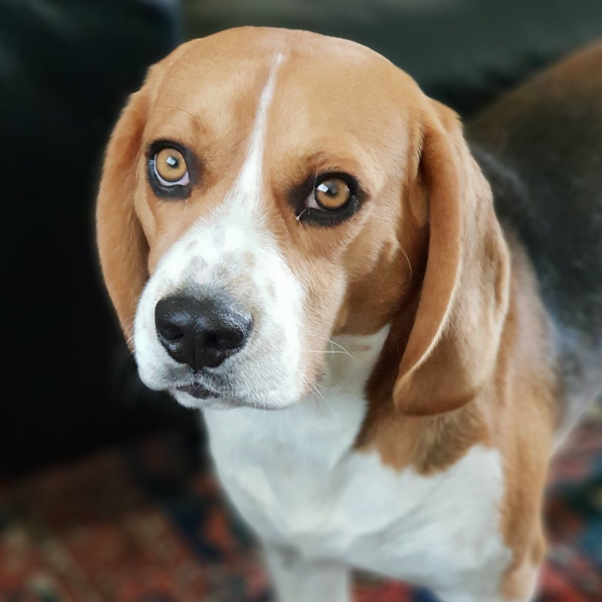 Pin By Design Gumbo On Beagles Mostly Beagle Art Baby Beagle