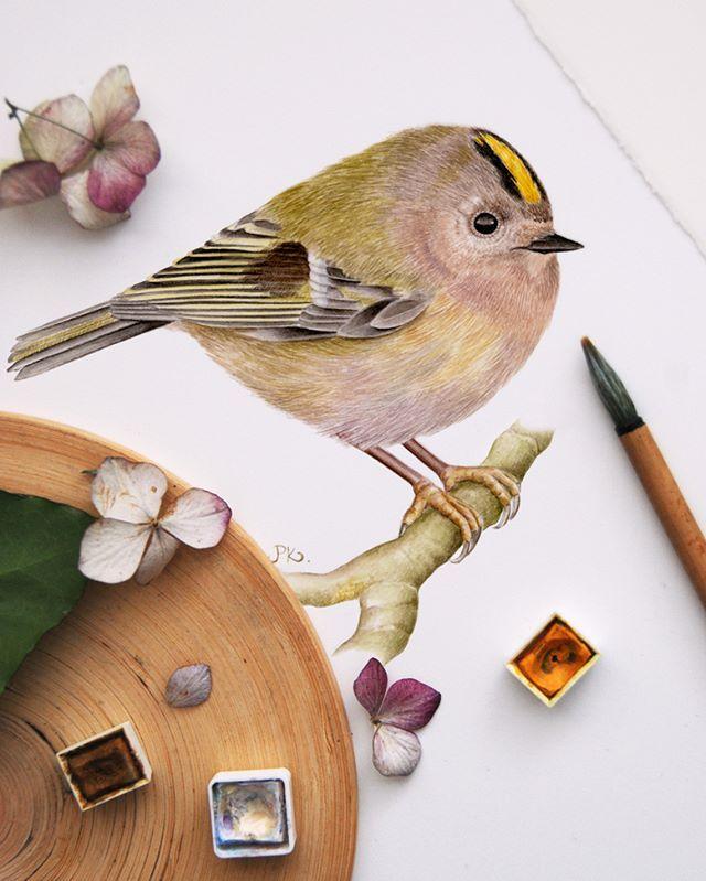 One Of The Smallest Kings Golden Crowned Kinglet Bird Illustration Bird Art Bird Prints