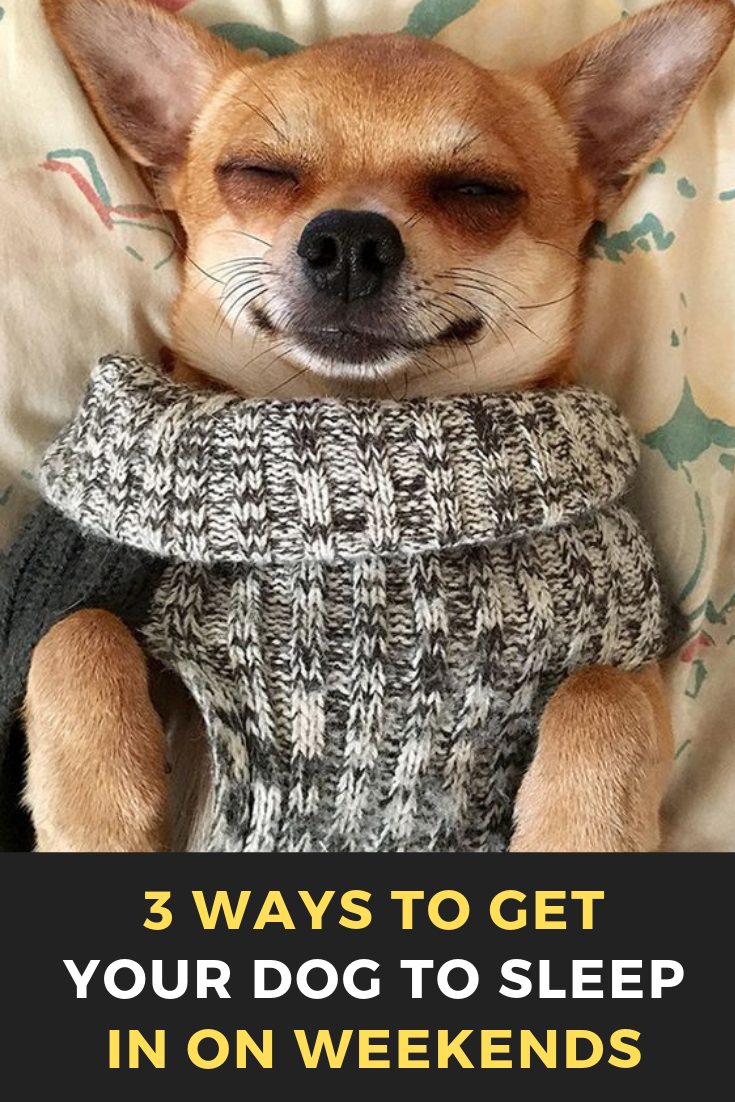 3 Ways To Get Your Dog To Sleep In On Weekends Your Dog Easiest Dogs To Train Dog Minding