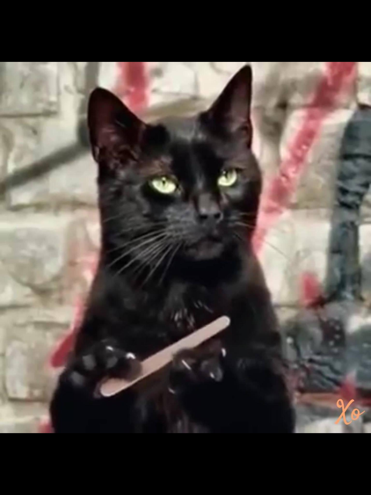 Black Cat Filing Nails : black, filing, nails, Renee, Witch, Cats,, Crazy, Memes