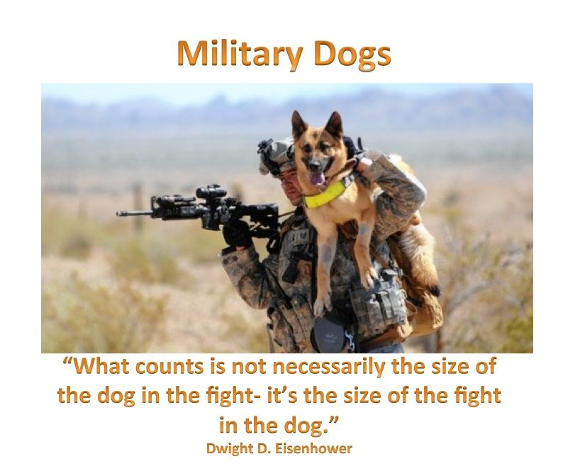 Soldier Dogs Deserve Same Rights As Humans When Serving Our
