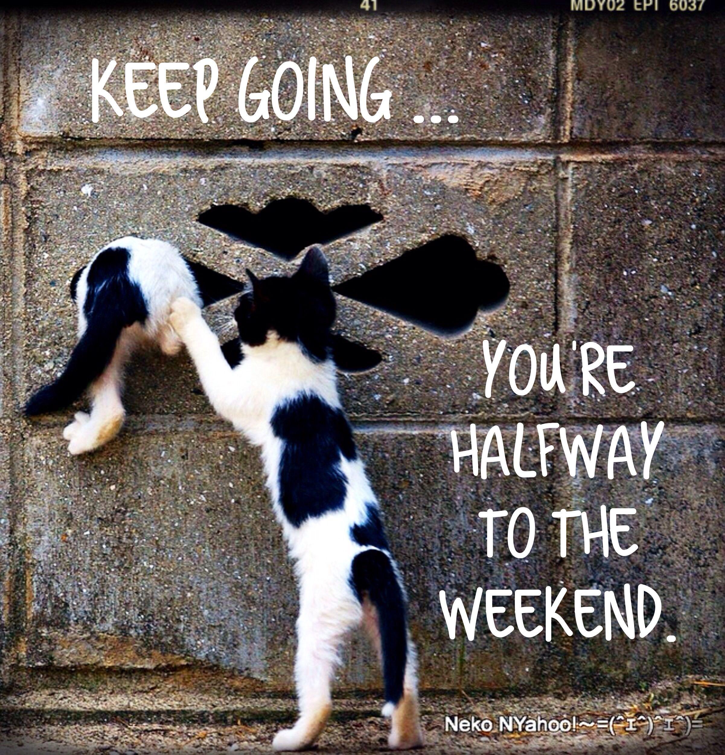 Wednesday humor | Halfway to the weekend | Halfway through ...