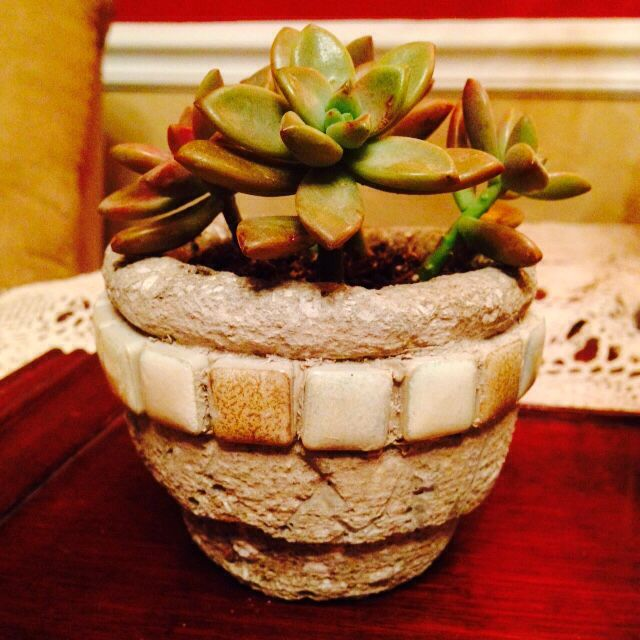 Sedum in small tiled Hypertufa