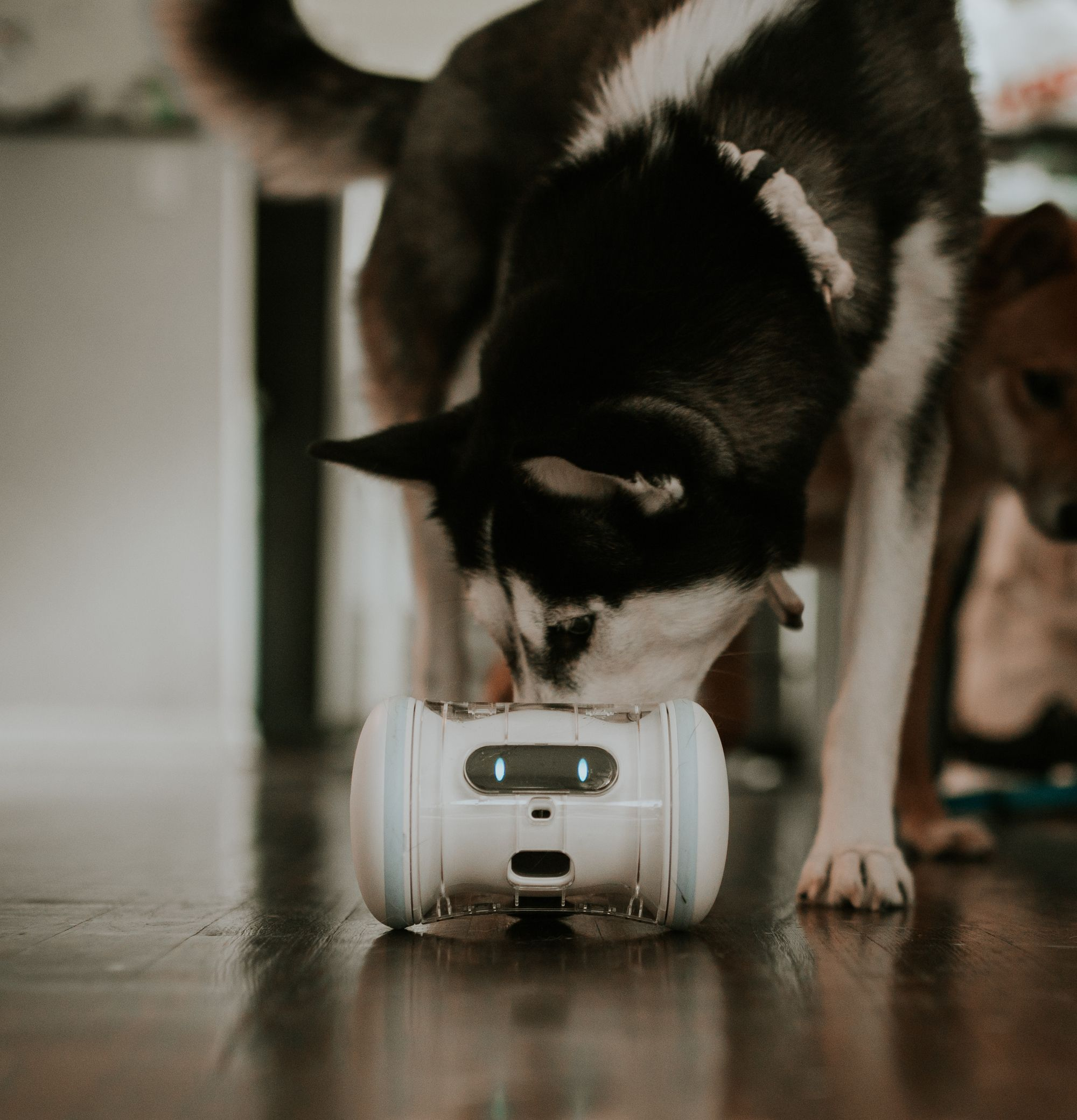 Pin By Varram On Varram Pet Fitness Robot Pets Players Mp3 Player