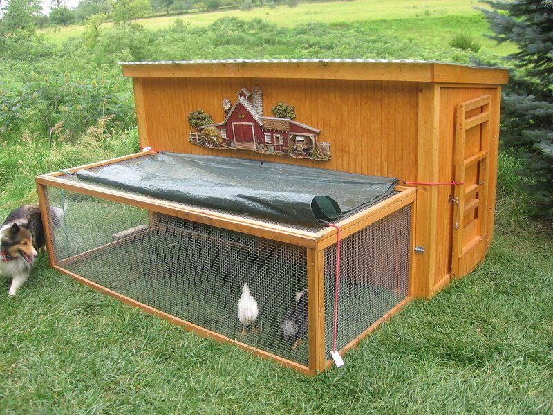 27 DIY Chicken Roosting Ideas For Chicken Comfortable Place. Simple Chicken  CoopBackyard ...