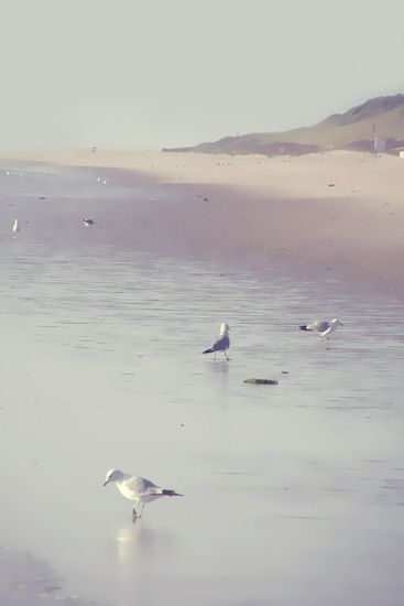 Neu in meiner Galerie bei OhMyPrints: MÖWEN I. #kunst #fotografie #Sylt #Hörnum #Möwen #Wattenmeer #Nordsee #PiaSchneider #ohmyprints #kunstdrucke #artprints #beach #northsea #seagulls #ocean