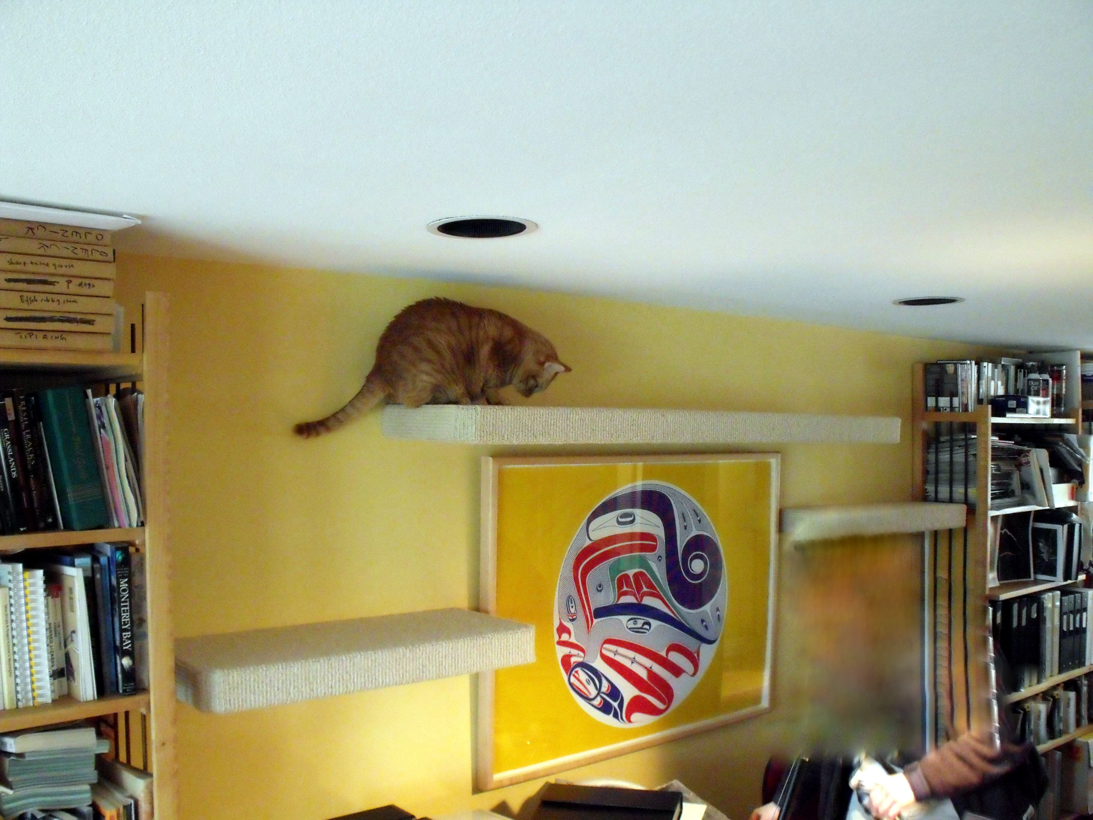 Carpeted Cat Shelves Beautiful World Living Environments Www.abeautifulwor.