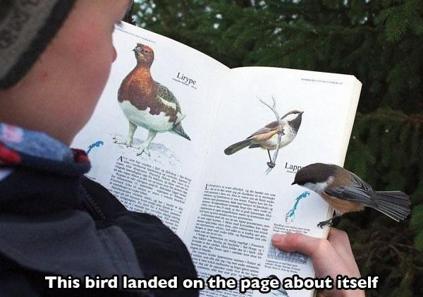 This curious critter decided to take time out of his day to fact-check this bird guide:   Community Post: 24 Spectacular Coincidences That Will Make You Question Reality