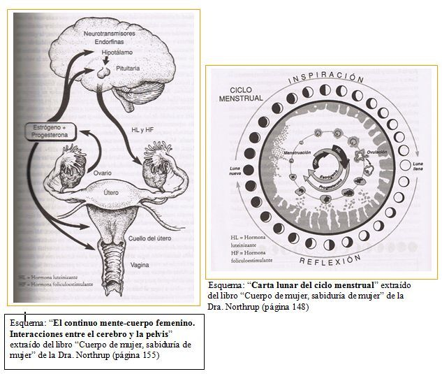 Ciclo lunar – Ciclo Menstrual. Si la luna influye sobre la marea y somos 70% agua, pensar que no tiene un efecto sobre nosotras no tiene sentido...