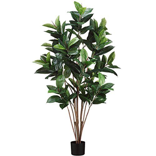 5' Rubber Leaf Silk Tree w/Pot -Green (pack of 2) ** Be sure to check out this awesome product.