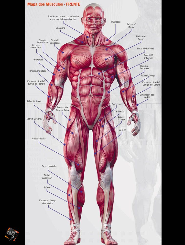 Mapa dos músculos - Frente   sistema muscular jana   Pinterest ...