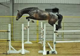 free jumping - Google Search