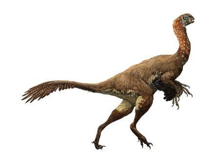 Oviraptorids Bones Beaks Claws Of Bird Like Dinosaurs