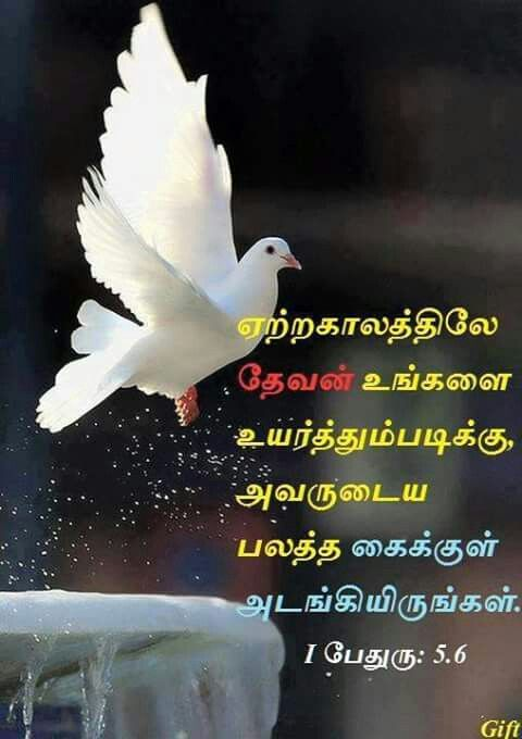 Pin By Selvi Mullar On Bible Verse Wallpaper Bible Words Bible Words Images Tamil Bible Words