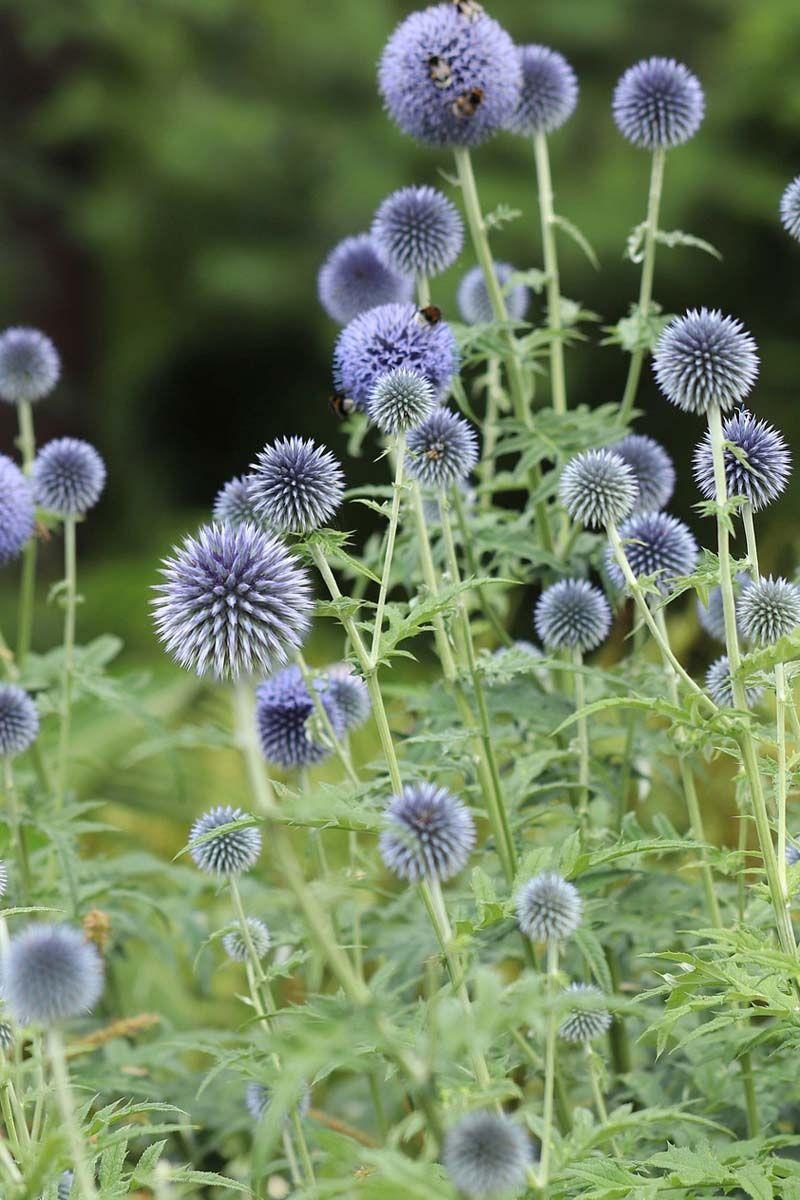 21+ 10 pflegeleichte Gartenpflanzen, die keine Mühe machen Stock