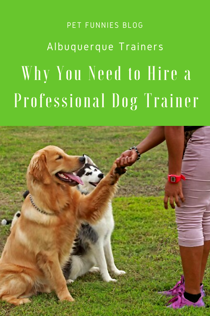 Albuquerque Trainers Why You Need to Hire a Professional