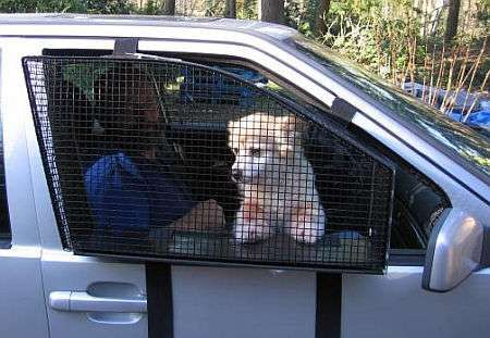 Car Window Sills | Pet accessories, Dog and Cars