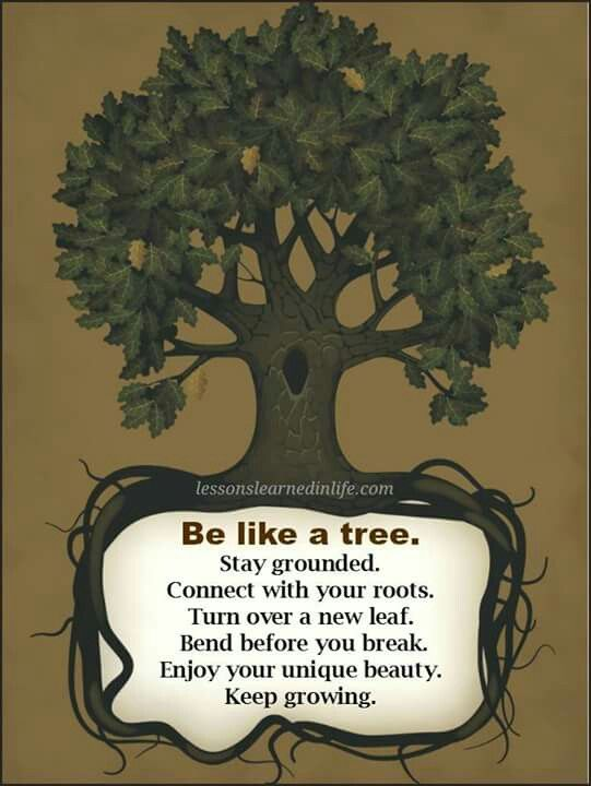 The Tree of Life - Movie Quotes - Rotten Tomatoes