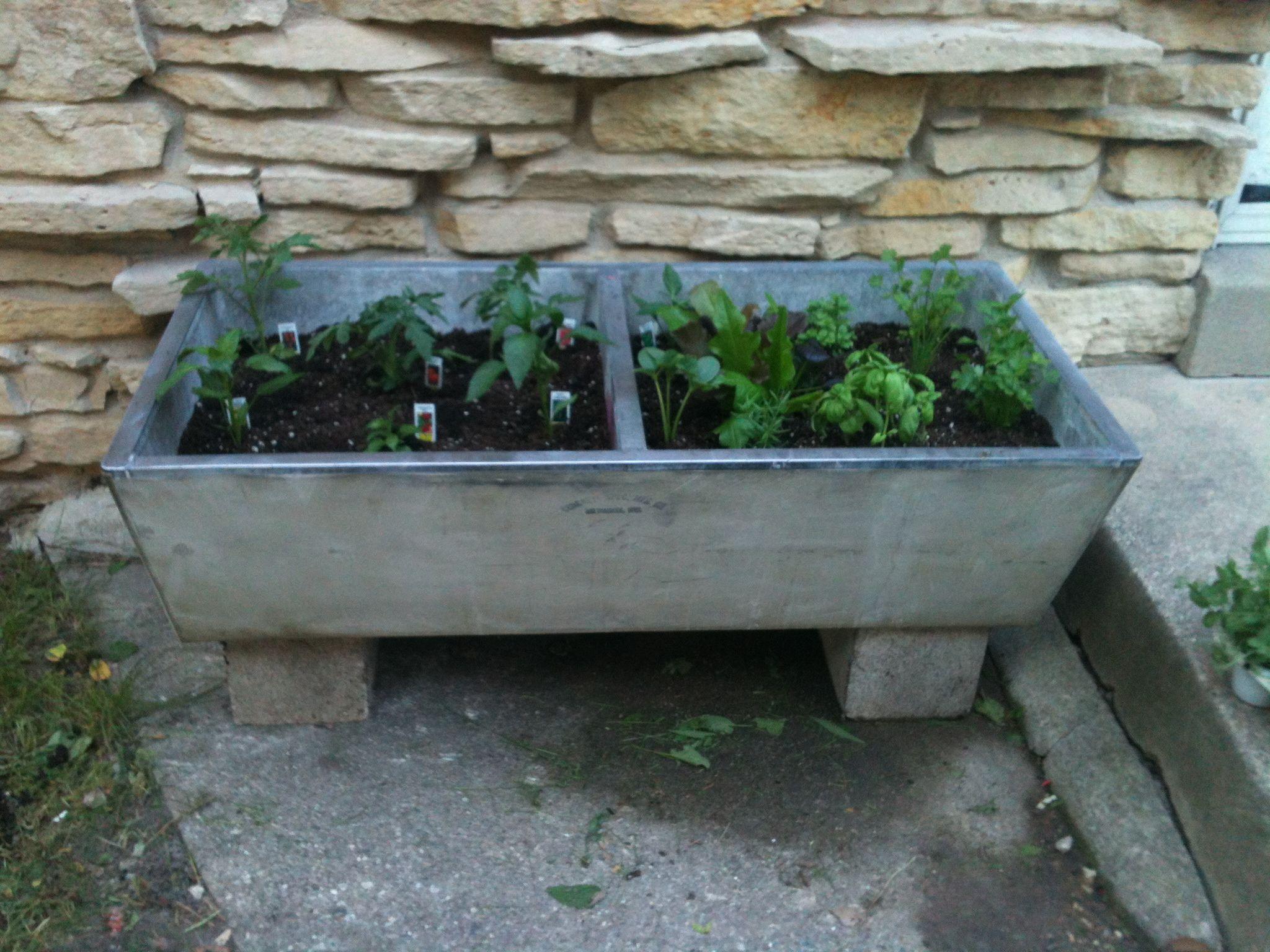 Concrete Sink Diy Concrete Laundry Sink Planter My Garden Projects Pinterest