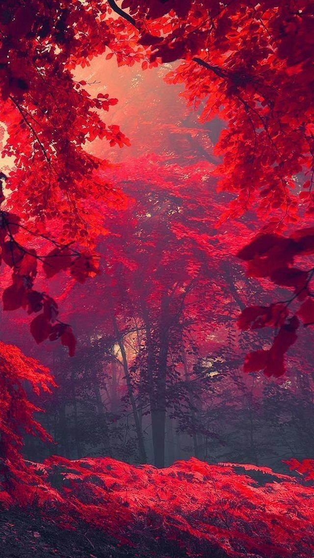 So very beautiful Beautiful nature wallpaper, Aesthetic