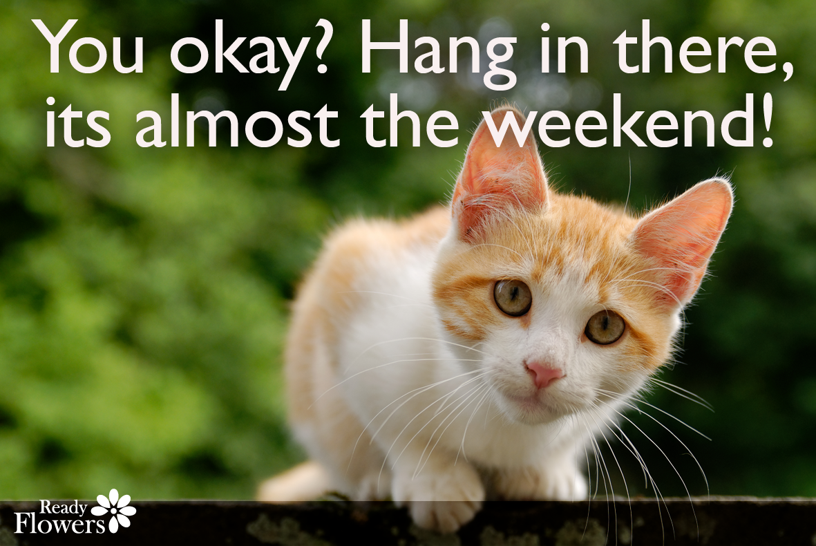 Catch 22 Cat Quotes That Sum Up Cats Purrfectly