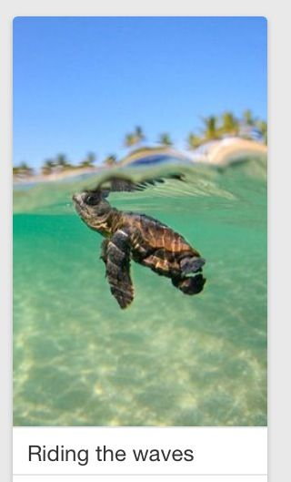 Pin by caitlin conrad on art pinterest explore turtle baby baby sea turtles and more publicscrutiny Image collections