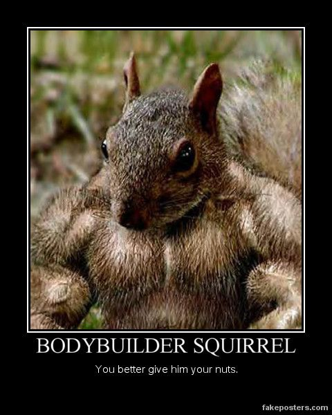 Bodybuilder Squirrel - reminds me of my trainer