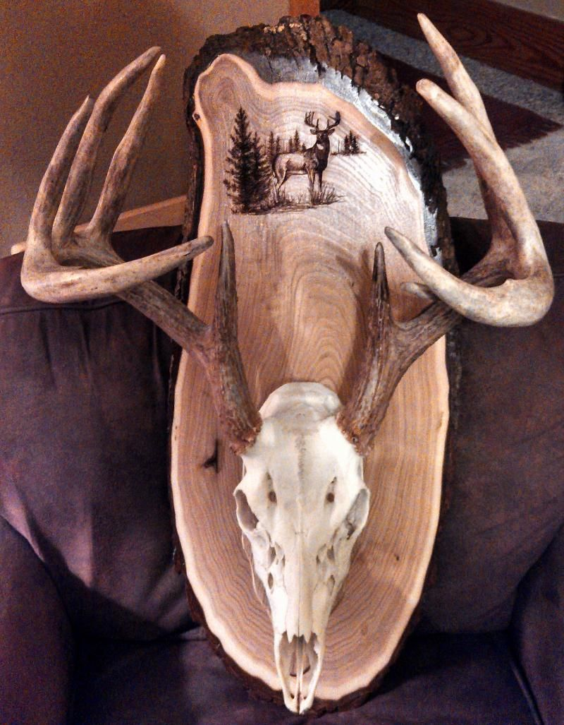 Deer skull mount ideas - Find This Pin And More On Rustic Deer Mounting Boards By Pin8trees