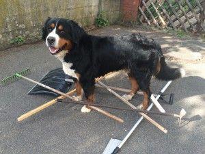 Hundebeschaftigung Tag 25 Mikado Hund Beschaftigen Hunde Und