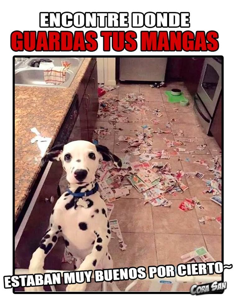 Pin By Andress Jaramillo On Yuuxmika Memes Xd Pets Memes Dogs