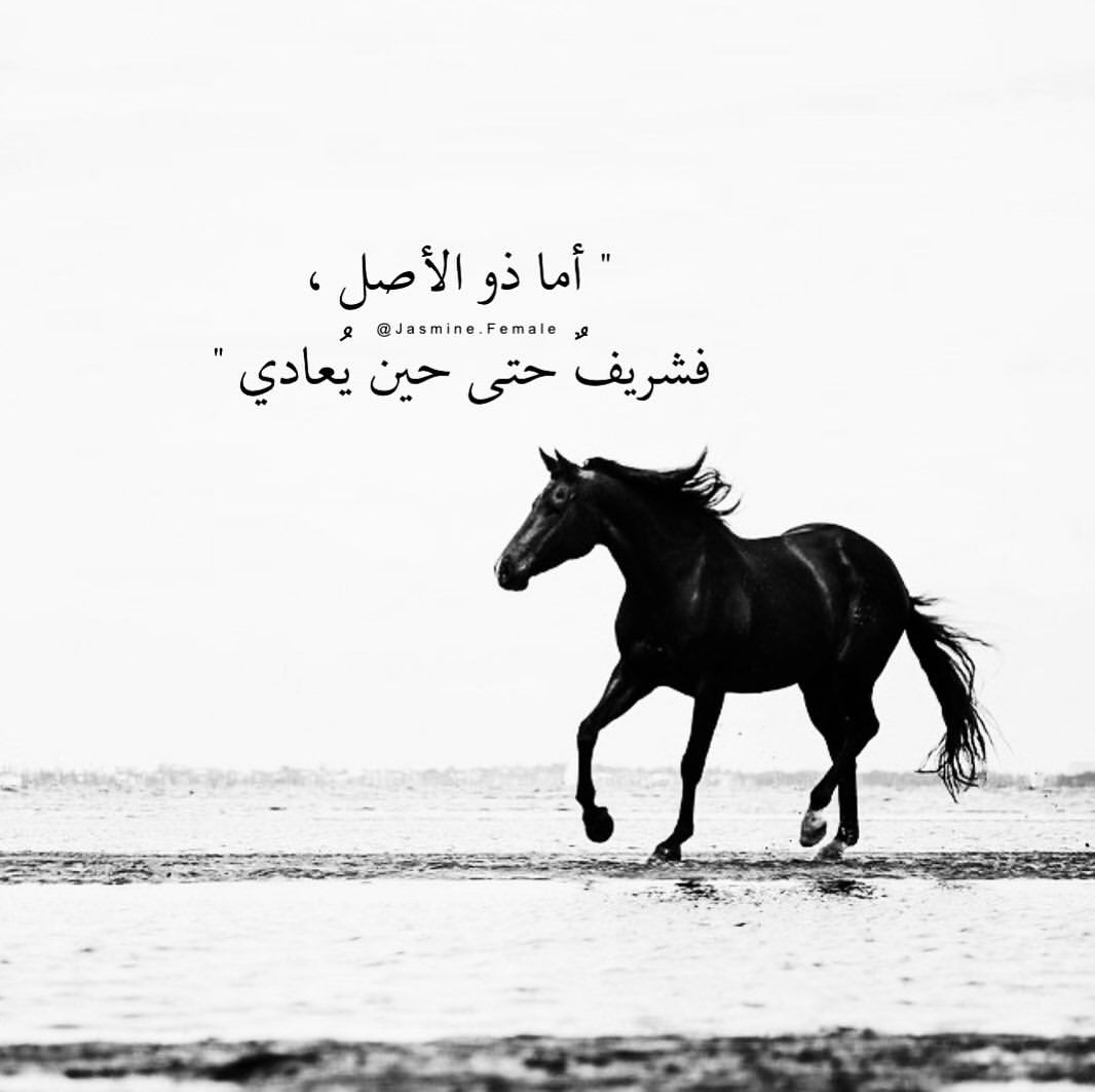 𝖩𝖠𝖲𝖬𝖨𝖭𝖤 𝖥𝖤𝖬𝖠𝖫𝖤 𐂃 On Instagram ذو الأصــــل لعشاق ال Arabic Quotes Quotes Home Decor Decals