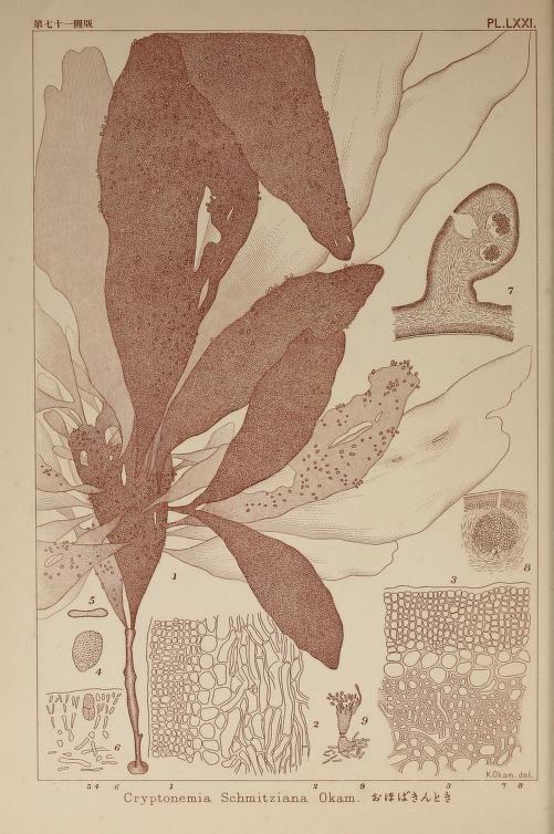 v.2 (1912) - Icones of Japanese algae - Biodiversi