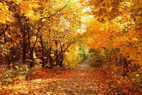 Happy October! Painting Autumn | Jason Walcott Fine Art