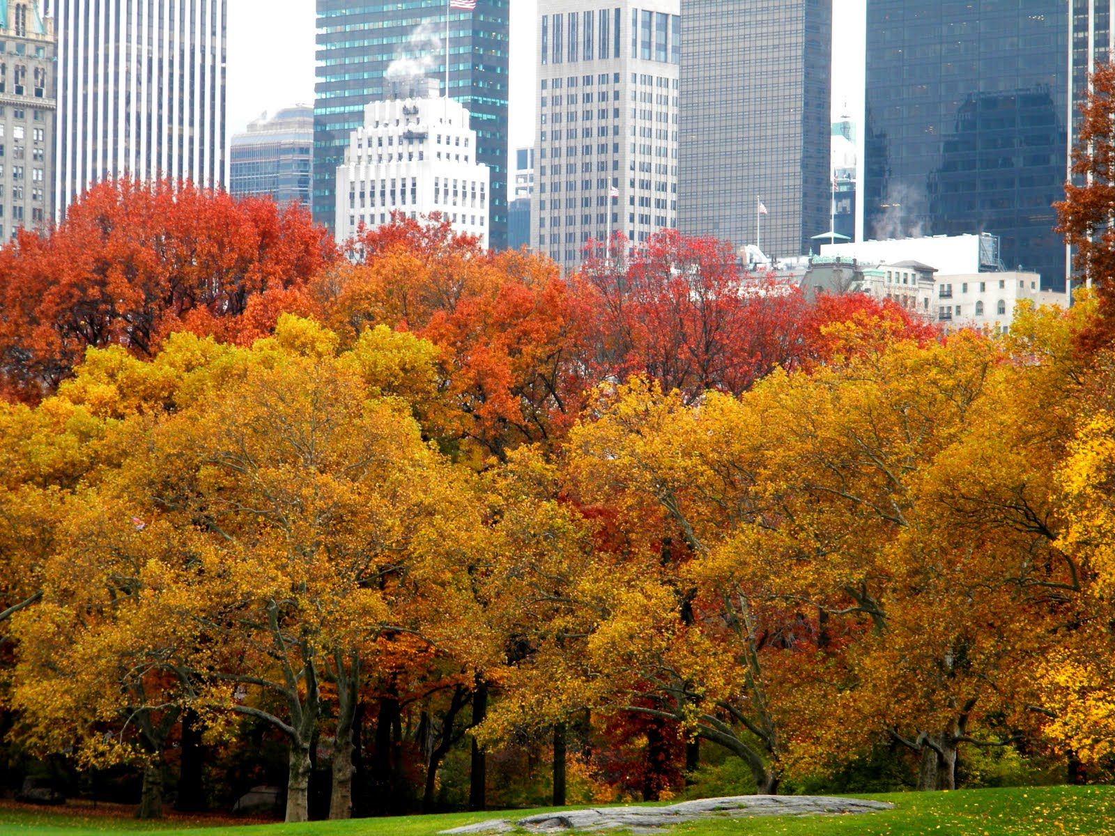 Superieur Autumn Colors U0026 New York City Skyline