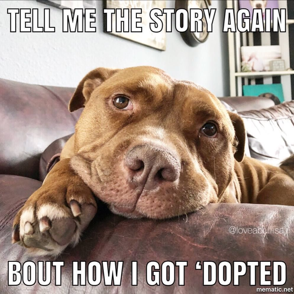How I Think My Animals Feel When I Tell Them The Story Funny
